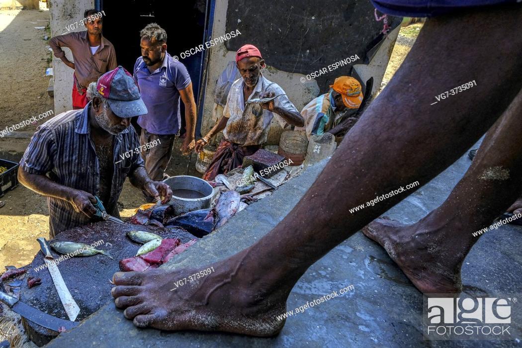 Stock Photo: Trincomalee, Sri Lanka - February 2020: Fish sellers at the Trincomalee market on February 16, 2020 in Trincomalee, Sri Lanka.