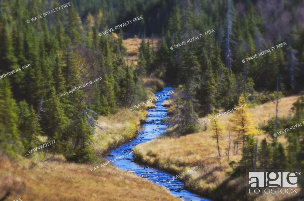 Stock Photo: River runs through spruce, pine and larch forest Cape Breton Highlands National Park.