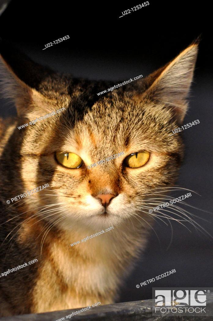 Stock Photo: Young cat. Verucchio, Rimini, Italy.