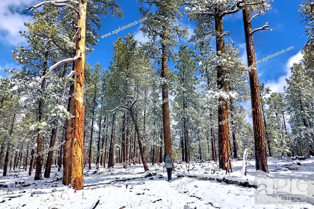 Photo de stock: Hiking in the snow on the Mogollon Rim, Mormon Lake, Arizona, U. S. A.