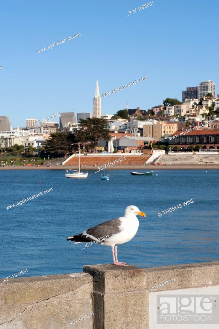 Stock Photo: Seagull sitting on pier, Aquatic Park, San Francisco, California, USA.