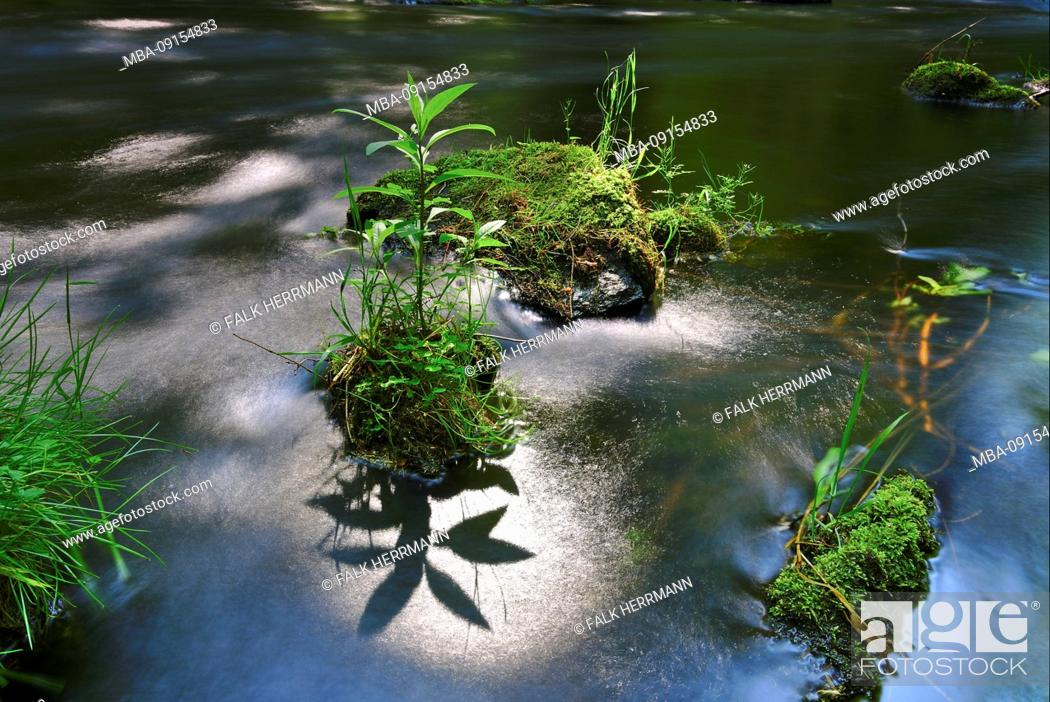 Stock Photo: River, plants, long exposure.