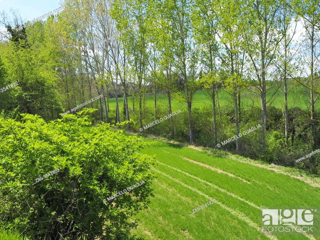 Stock Photo: Tractor trails at pasture. Springtime at Olost village countryside. Lluçanès region, Barcelona province, Catalonia, Spain.