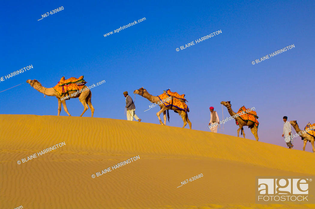 Stock Photo: A line of camels mounts a rise in the Kanoi Sand Dunes, Thar Desert near Jaisalmer, Rajasthan, India.