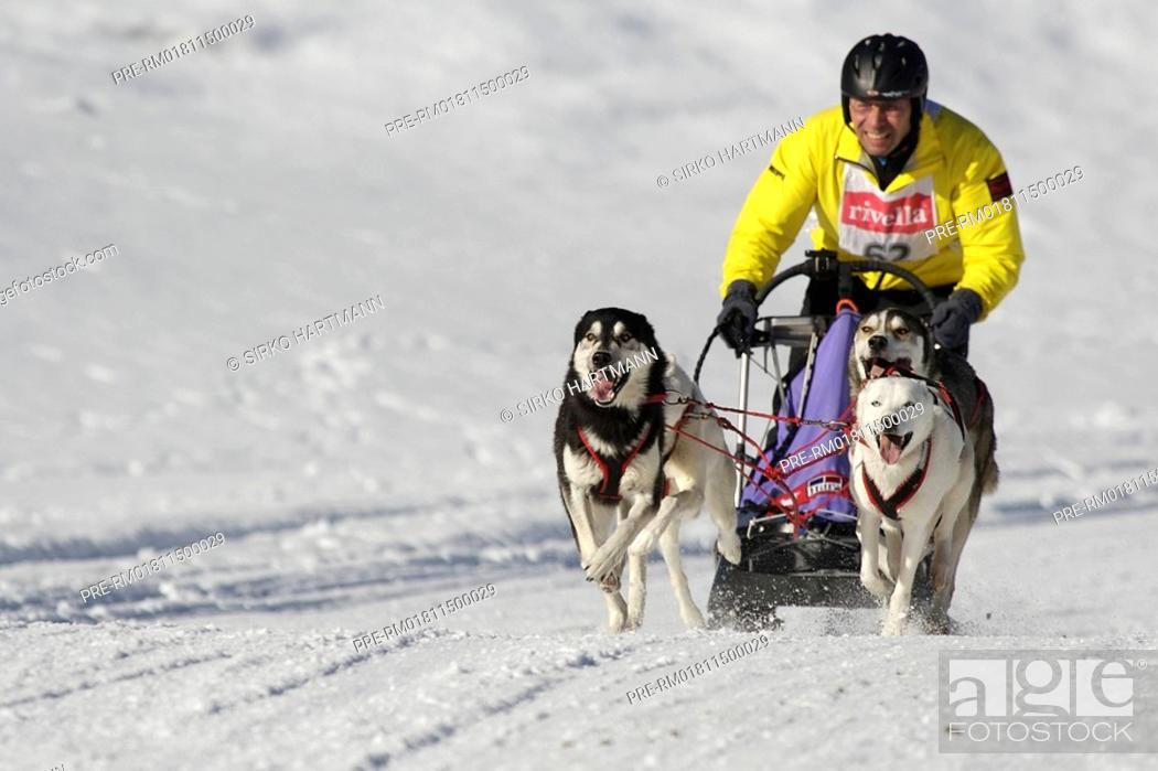 Dog sledge race, Stock Photo, Picture And Rights Managed