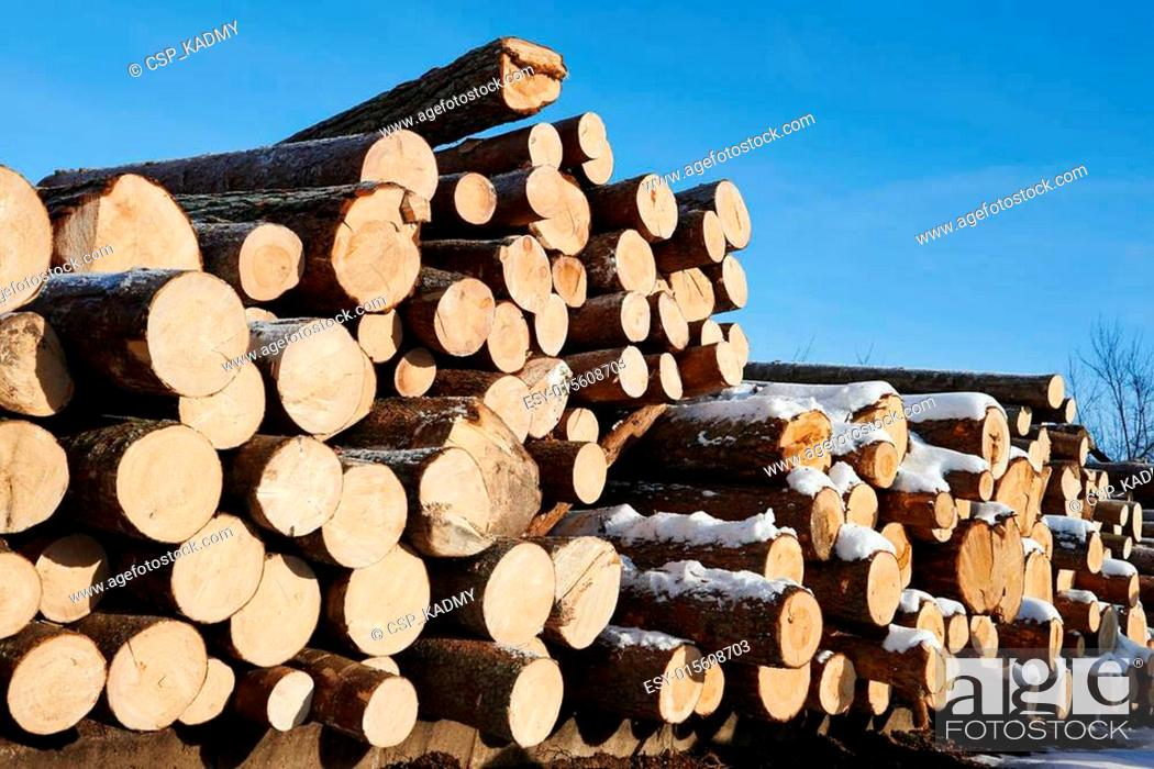 Stock Photo: Pine timber background.