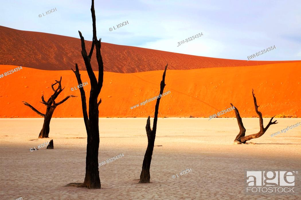 Stock Photo: dead trees in Dead Vlei, Namibia, Sossusvlei, Namib Naukluft National Park, Namib.