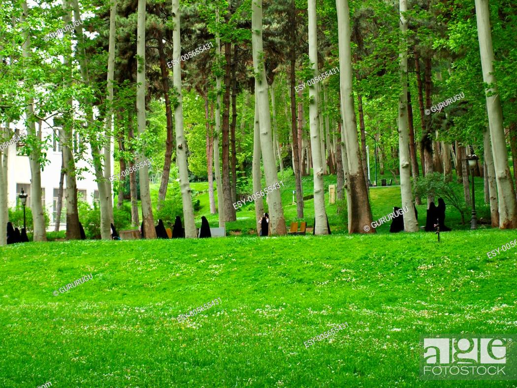 Stock Photo: Meadow field and forest landscape.