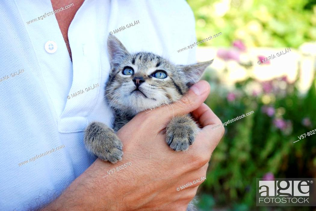 Stock Photo: Small tabby cat in man's hand.