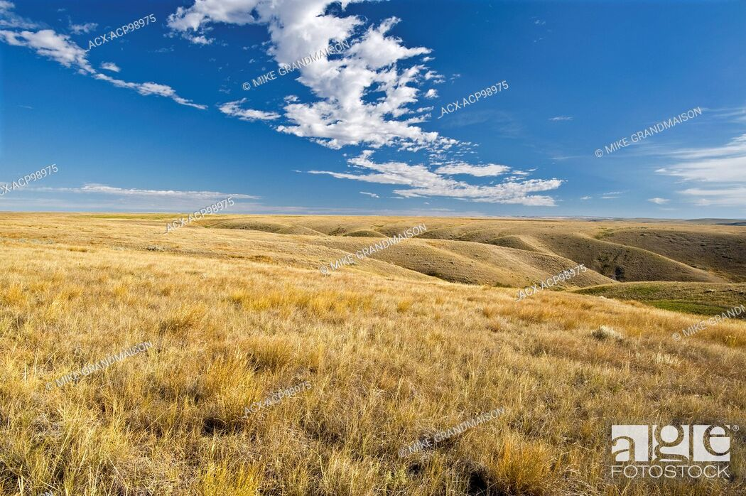 Imagen: native prairie grasslands. (West Block) Grasslands National Park Saskatchewan Canada.