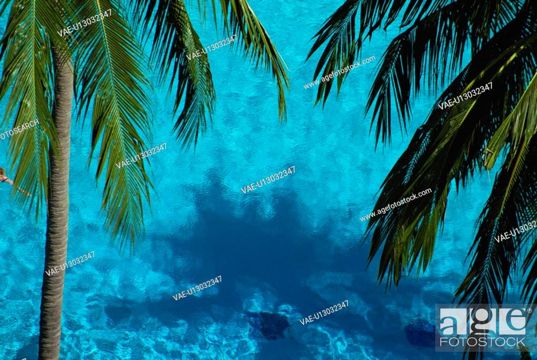 Stock Photo: The Sea And Coconut.