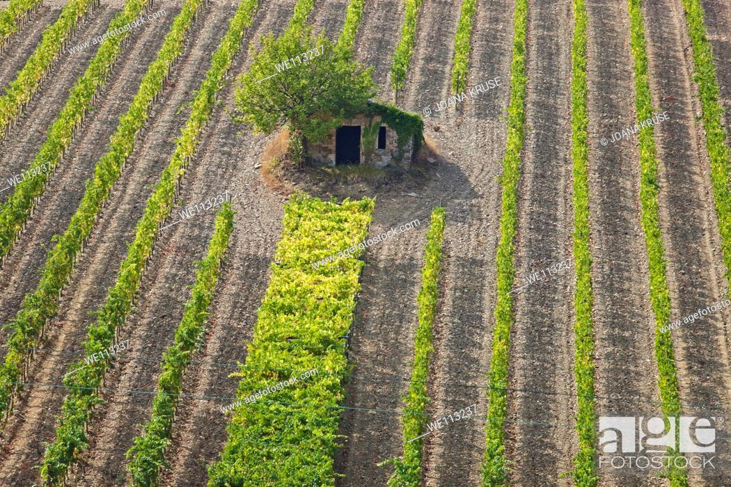 Stock Photo: vine yards in Tuscany.