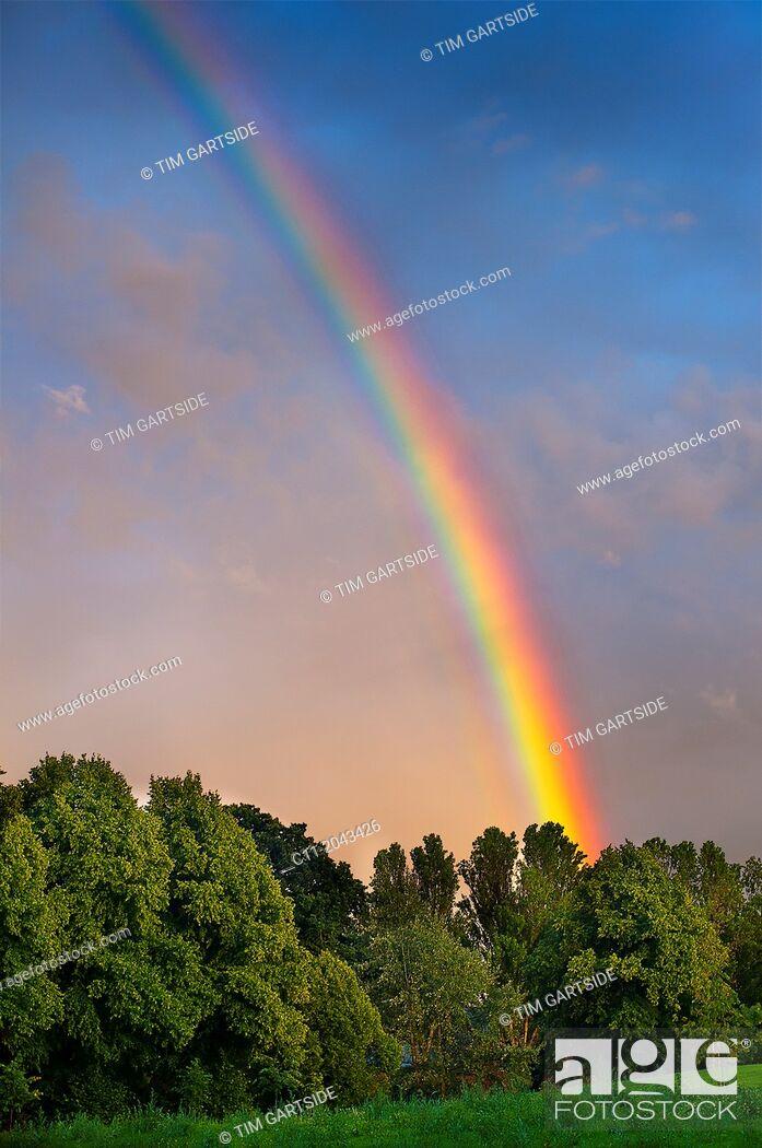 Stock Photo: Rainbow over trees.
