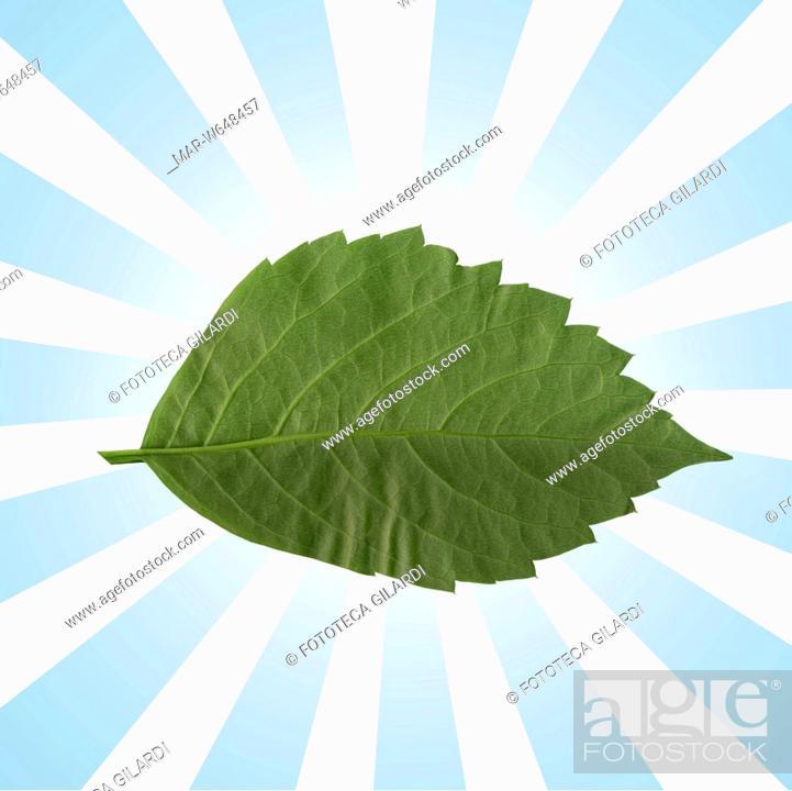 Foglia Verde Simbolo Ecologico Biologico Con Sfondo Di Raggi