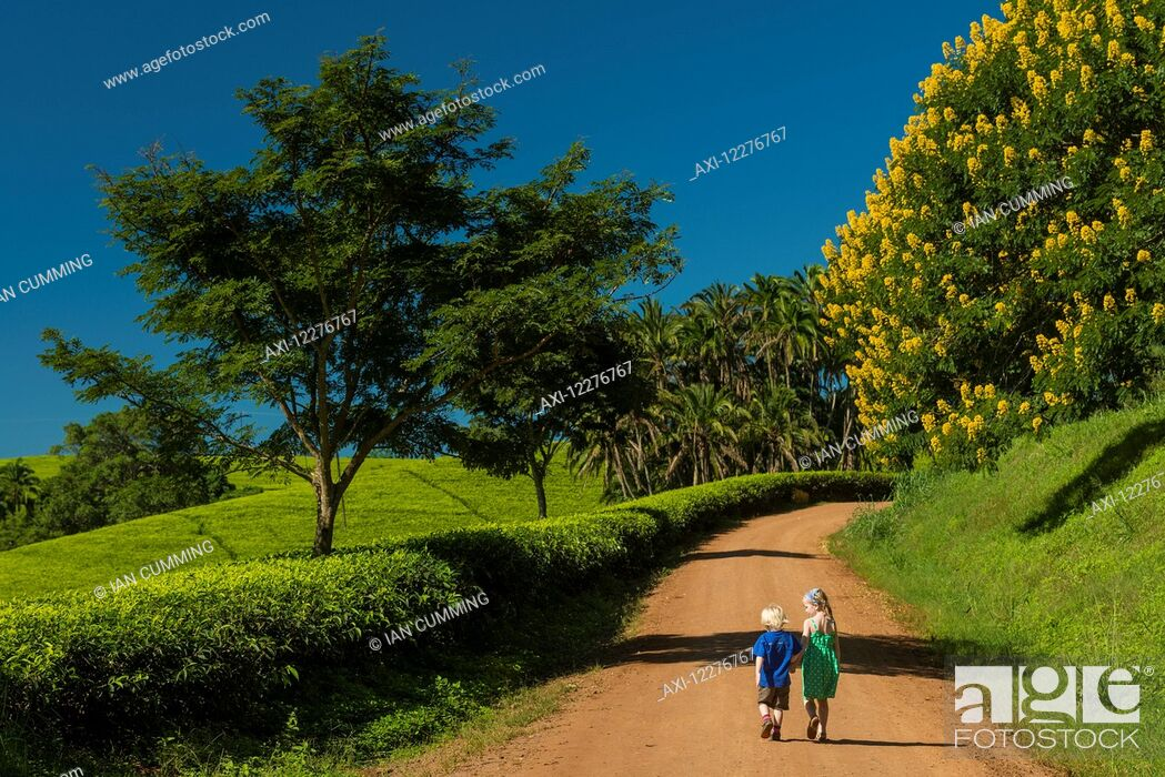 Imagen: Young boy and girl walking up road past fields of tea bushes and a Winter Cassia, Satemwa Tea Estate; Thyolo, Malawi.