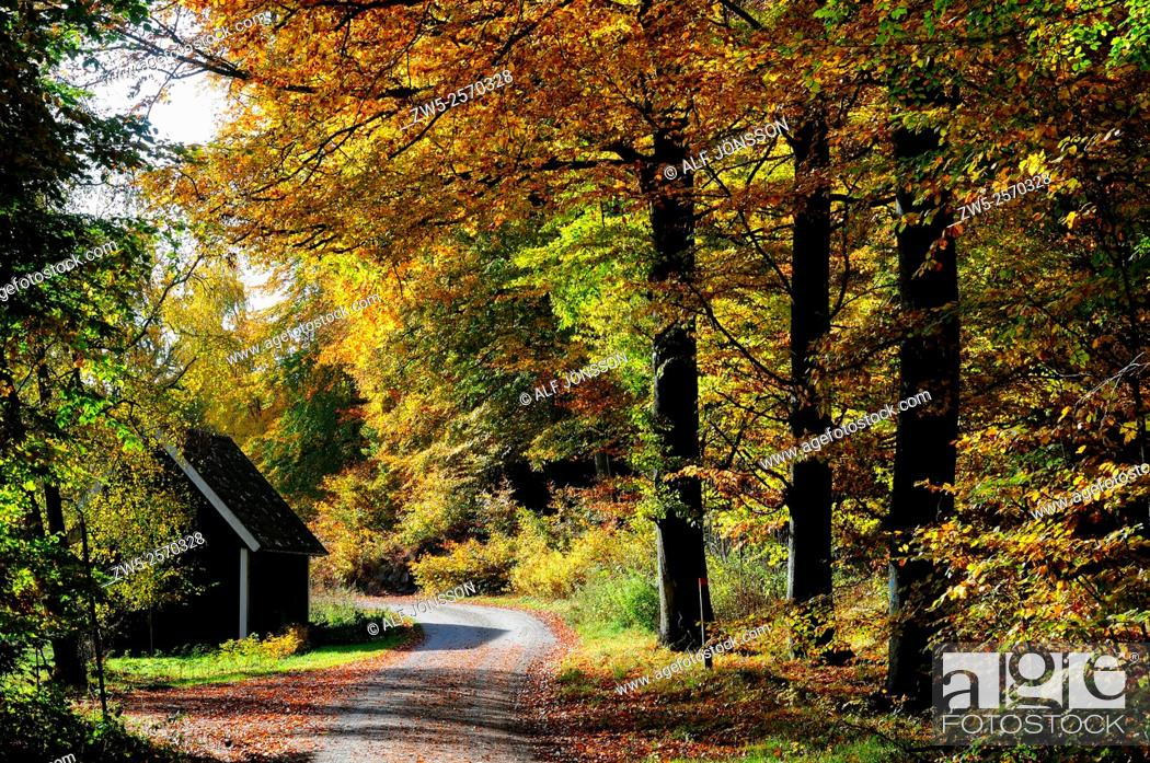 Stock Photo: Road and cottage in a forest in autumn colors in Snogeholm, south Sweden.