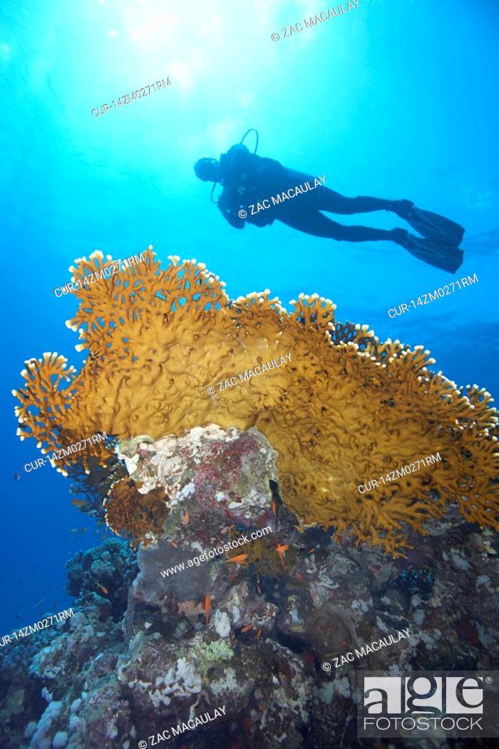Stock Photo: Diver in underwater cave.