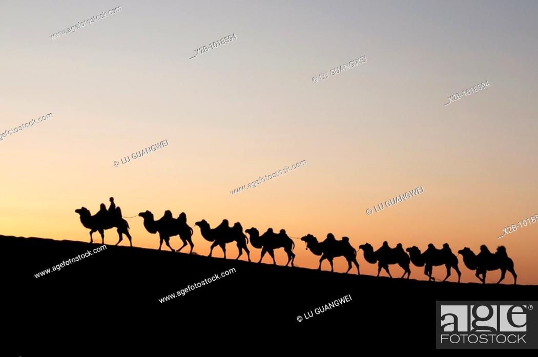 Stock Photo: In October 2009, China's Inner Mongolia Autonomous Region EJINAQI, camel train.