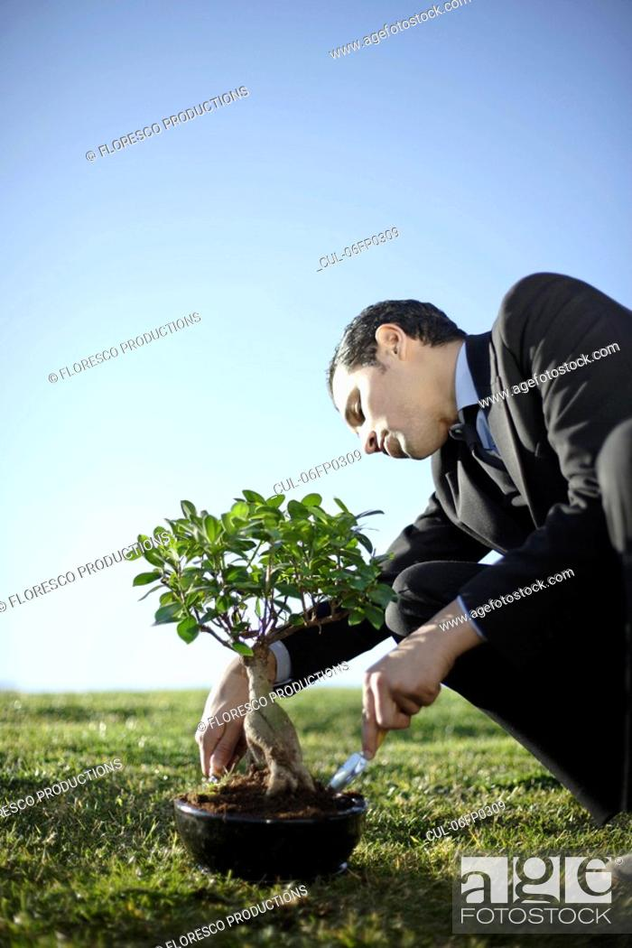 Stock Photo: Business man nurturing bonsai outdoors.