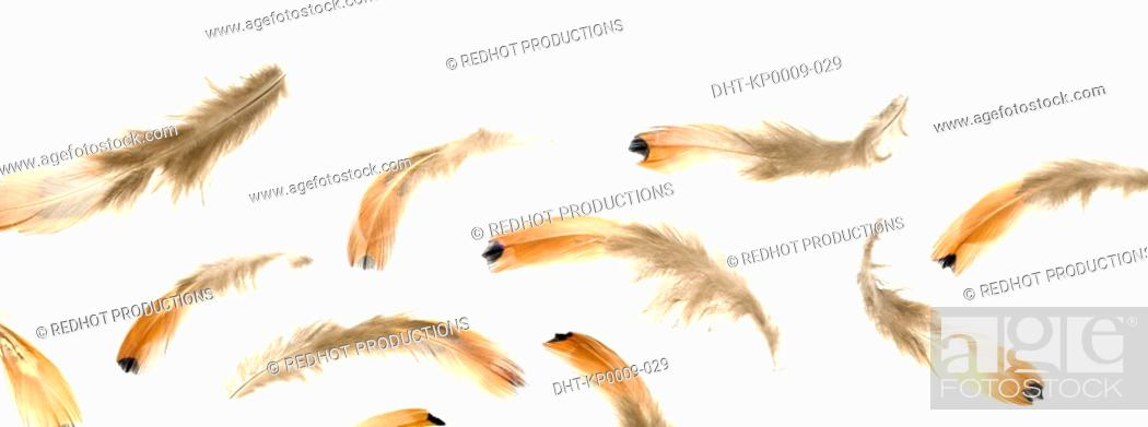 Stock Photo: Various Brown Feathers.