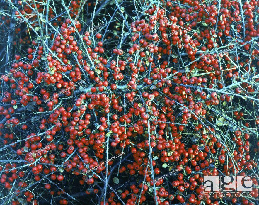 Stock Photo: Poland. Blue/red plant.