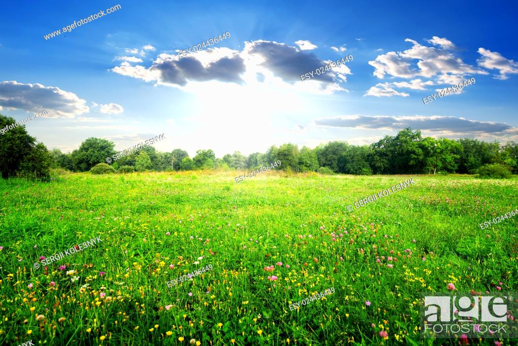 Stock Photo: Field flowers on a beautiful spring meadow.