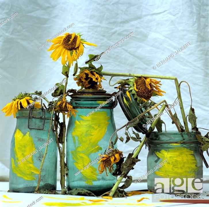 Stock Photo: Sunflowers in glass jars.