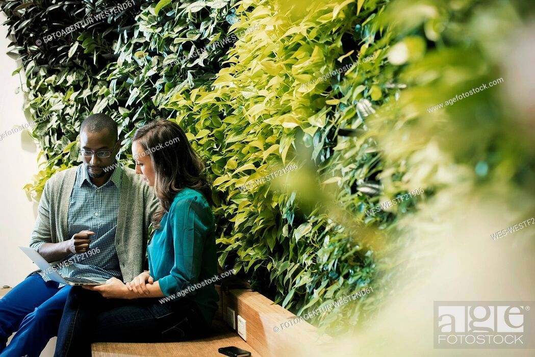 Stock Photo: Businessman and woman sitting in front of green plant wall, using laptop.