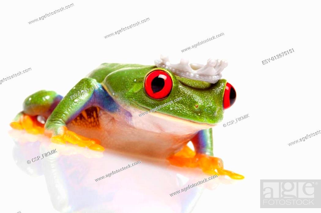 Stock Photo: Green frog closeup!.
