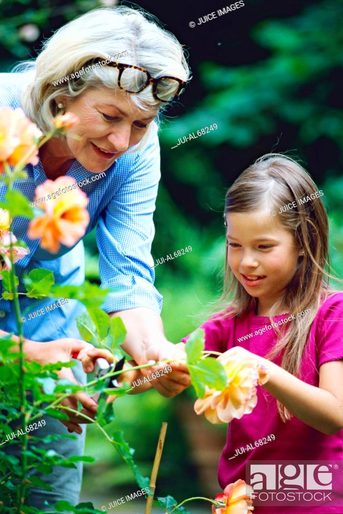 Stock Photo: Grandmother gardening with her granddaughter.