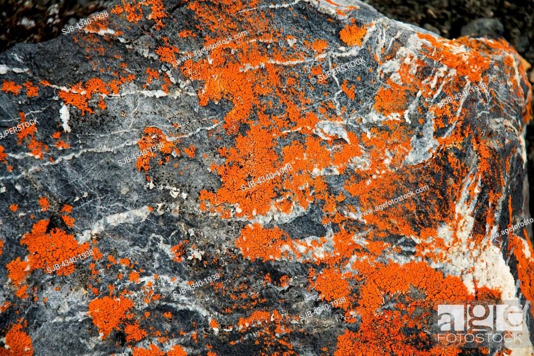 Stock Photo: Colorful orange lichen grows on a rock on the tundra in summertime, St. Jonsfjord, west coast of Svalbard, Norway.