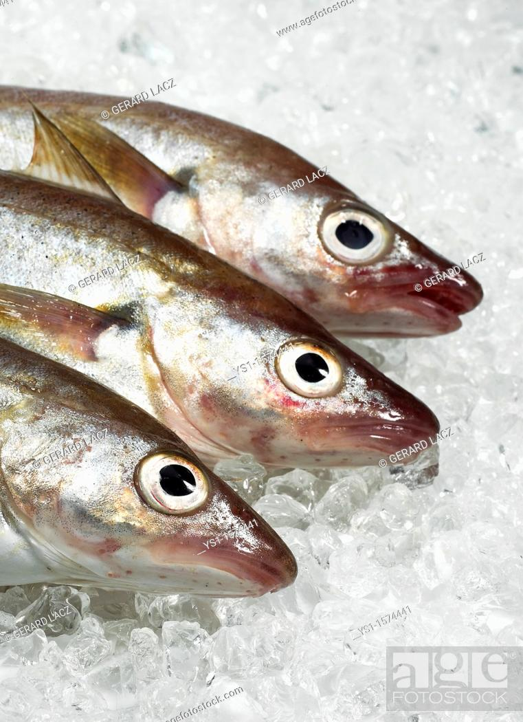 Stock Photo: Fresh Whiting, merlangius merlangus, Fishes on Ice.