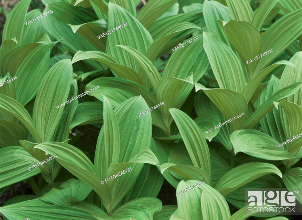 Stock Photo: Green Plants.