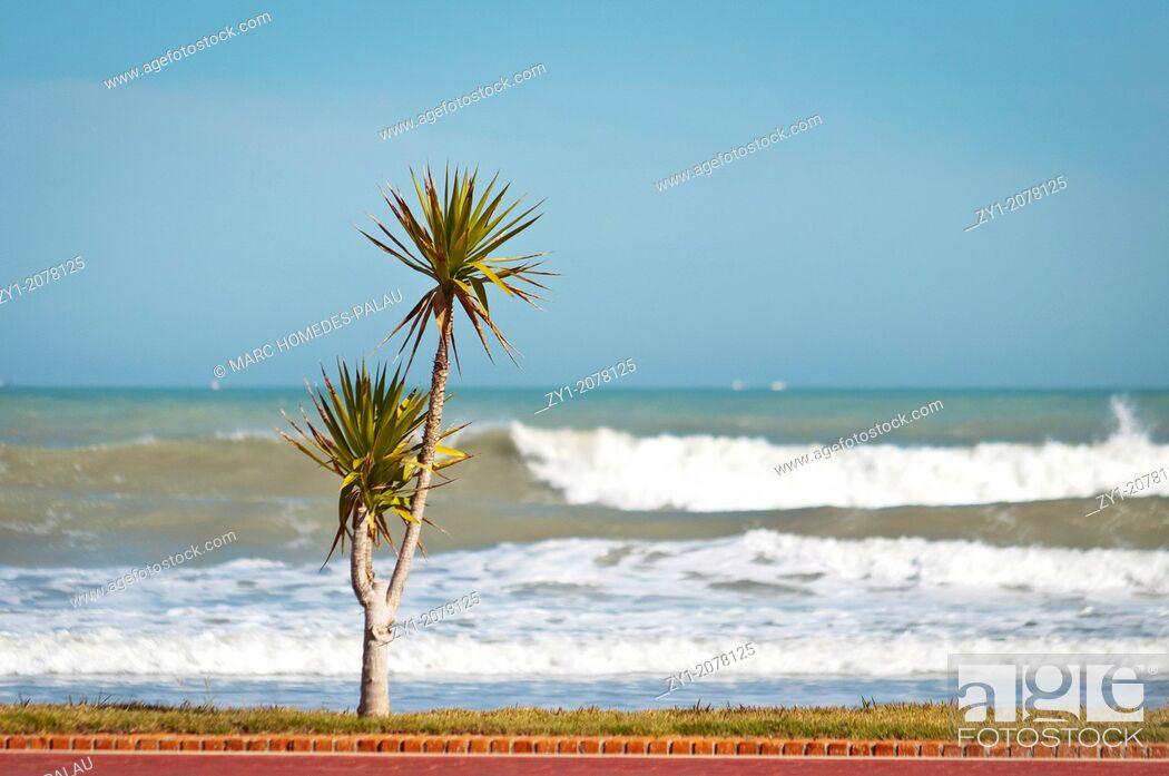 Stock Photo: Summer scene. Palms on the beach of Peniscola Spain.