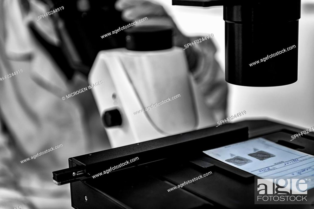 Stock Photo: Forensic Science. Police analyst examining fingerprints under the microscope.