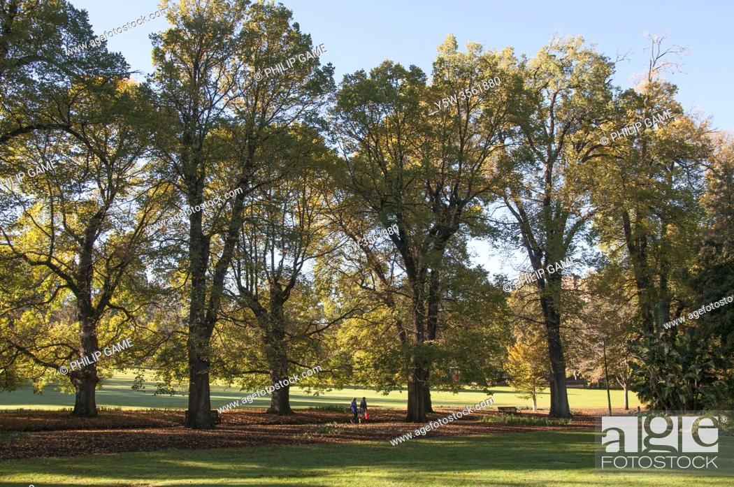 Stock Photo: Autumn morning in the Fitzroy Gardens, Melbourne, Australia.