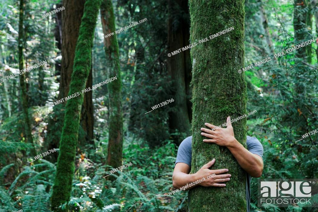 Stock Photo: Man hugging tree in lush, green forest.