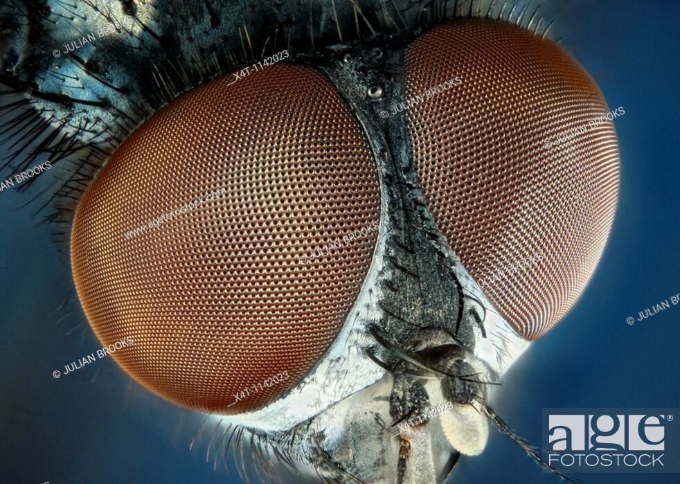 Stock Photo: Extreme close up of a house-fly's eyes.