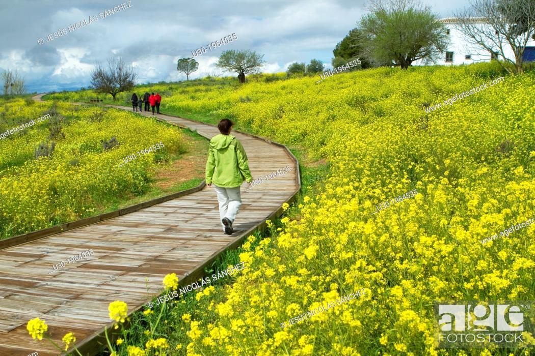 Imagen: Daimiel National Park, in Ciudad Real province. Castilla-La Mancha, Spain.