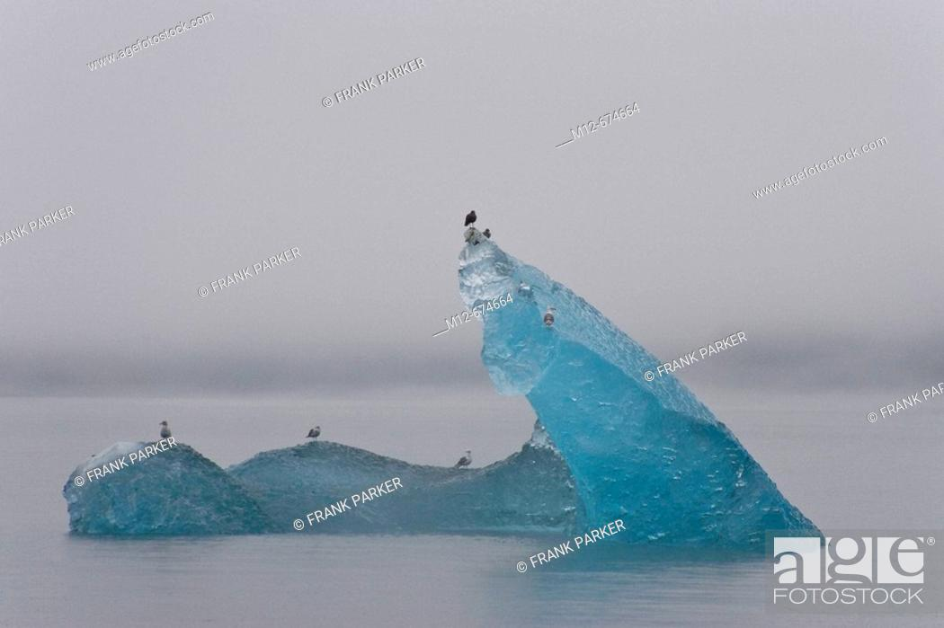 Stock Photo: Icebergs drift down Tracy Arm after calving from North Sawyer Glacier. Alaska, USA.