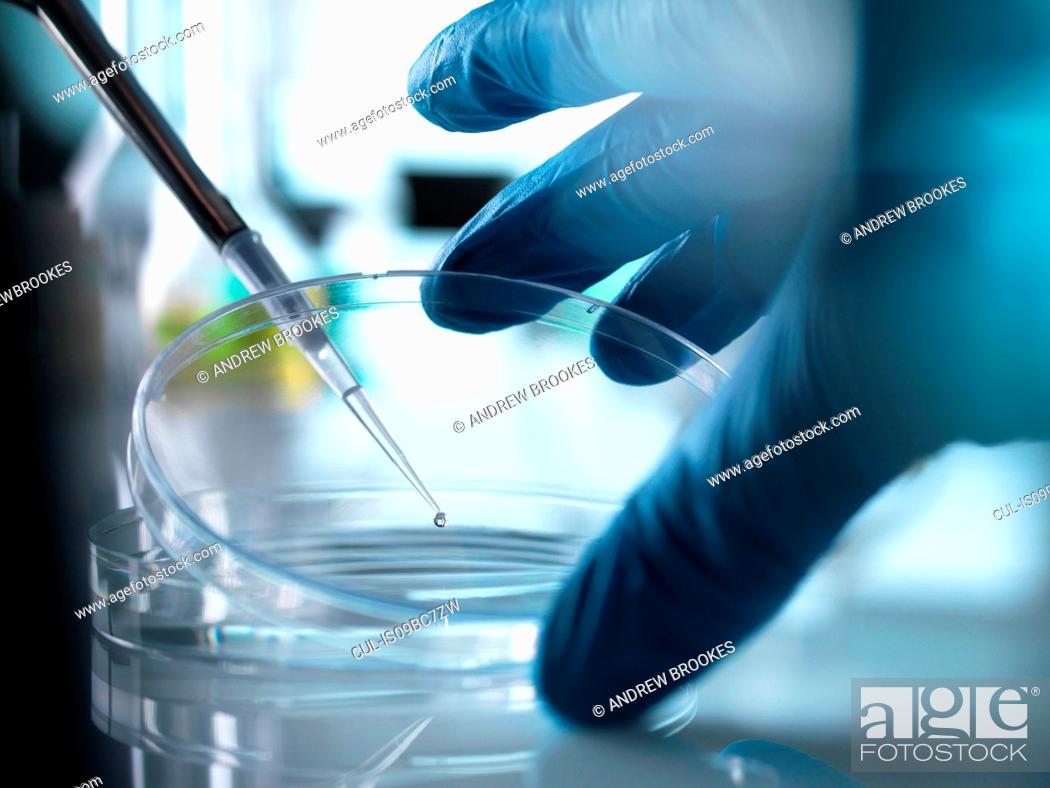 Imagen: Scientist pipetting sample into petri dish in laboratory.