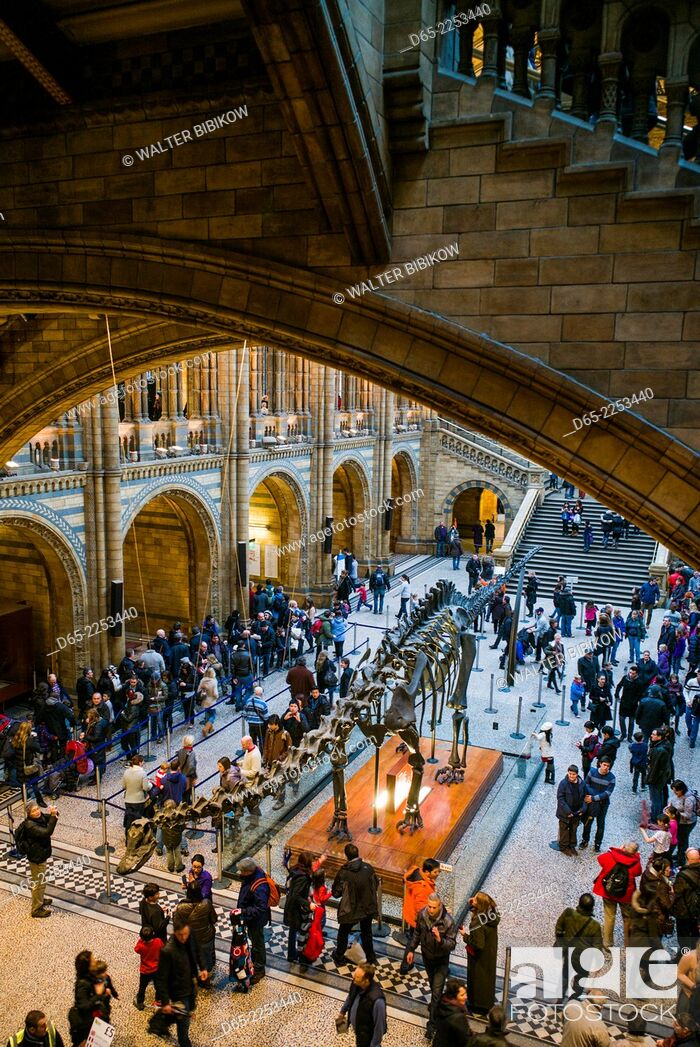 Photo de stock: England, London, South Kensington, Natural History Museum, interior.