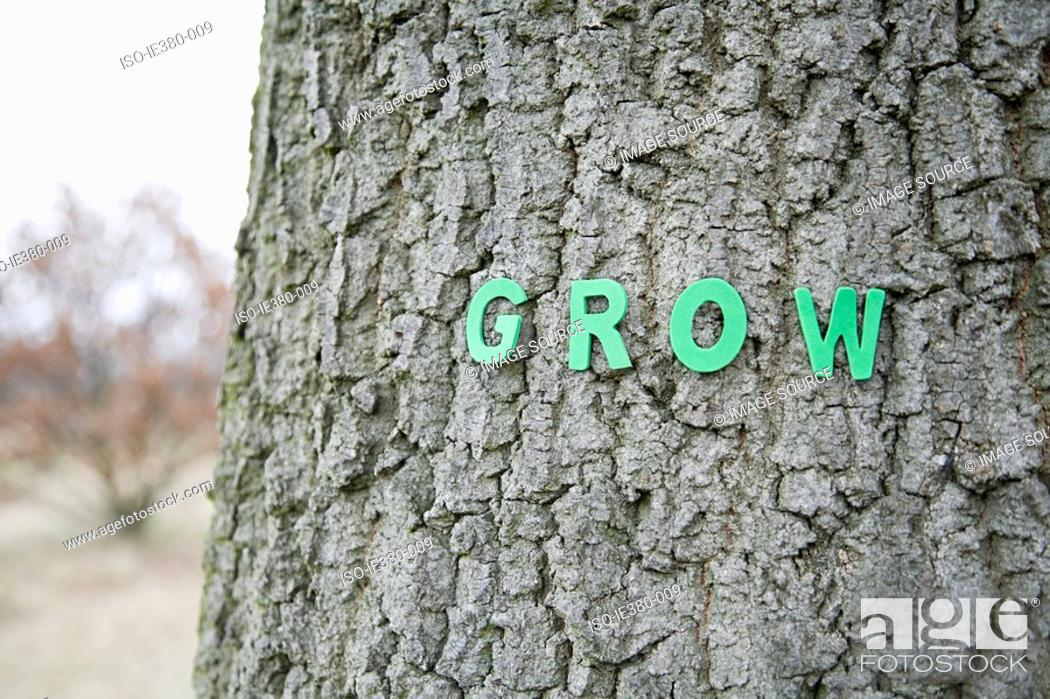 Stock Photo: Grow letters on a tree trunk.