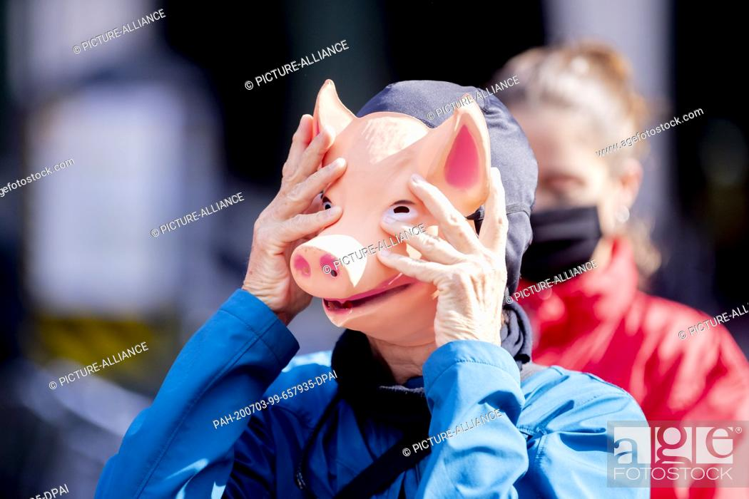 """Stock Photo: 03 July 2020, Berlin: A person wearing a pig mask grabs his head during a protest action by animal welfare activists and the animal welfare foundation """"""""Vier."""