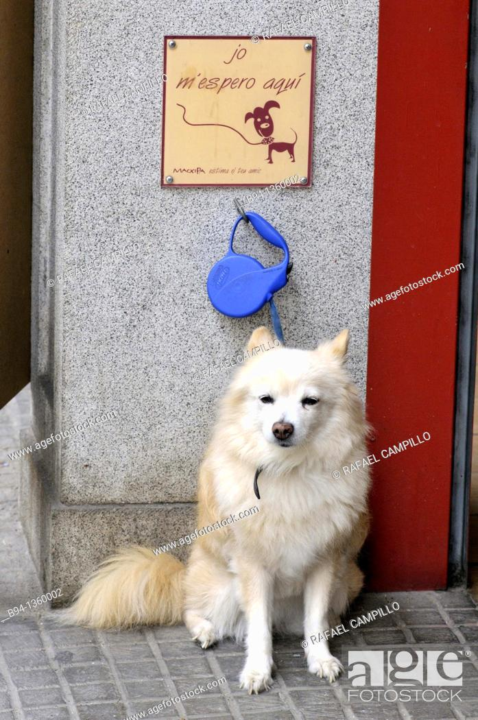 Stock Photo: Chained dog waiting outside a bakery.