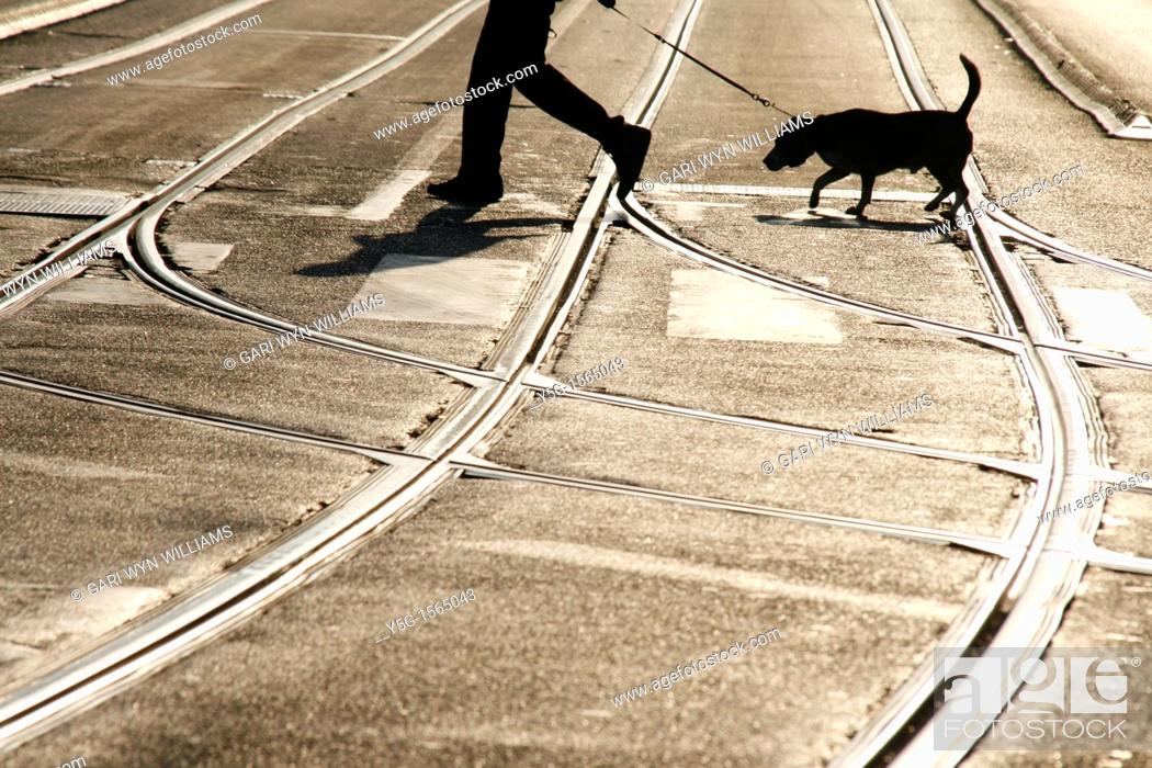 Stock Photo: person with dog crossing road in city in rome italy.