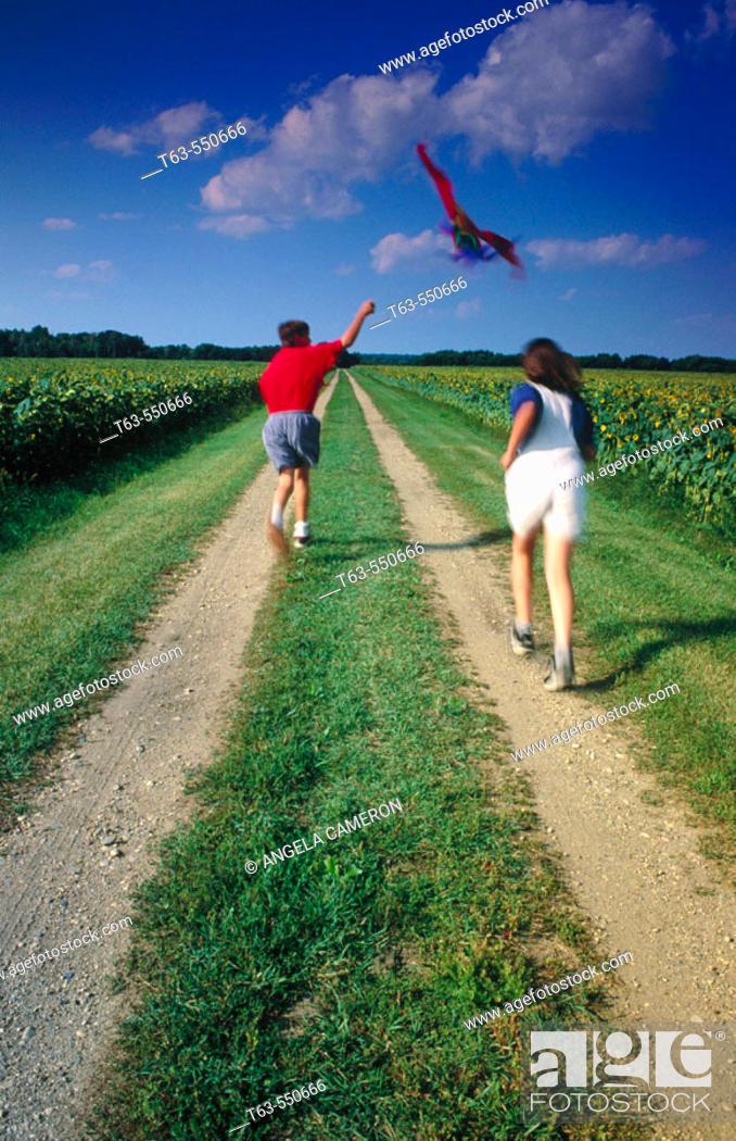 Stock Photo: Children flying kite along a sunflower field.