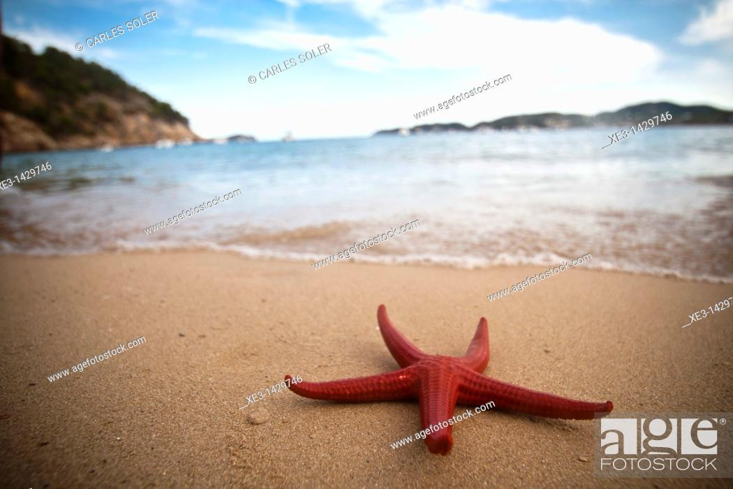 Stock Photo: Red starfish on the beach, Ibiza, Spain.