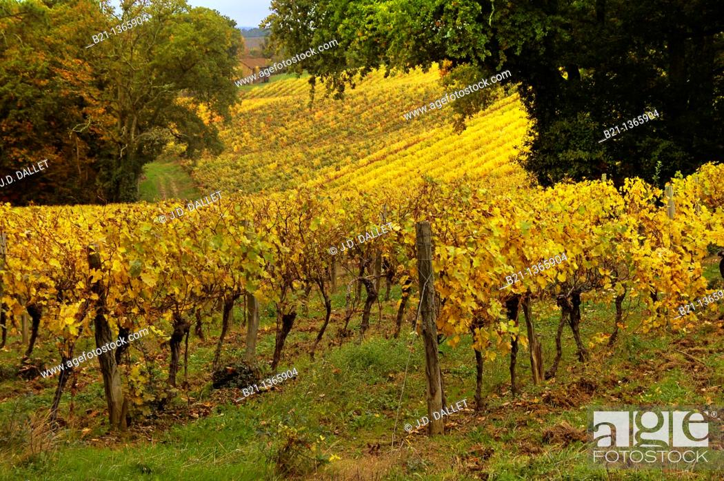 Stock Photo: France-Midi Pyrenées-Gers- 'Domaine de Joÿ' wines and Armagnac Estate, at Panjas Autumn.