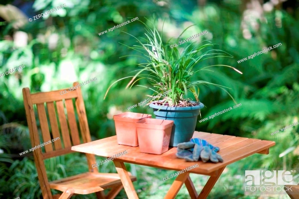 Stock Photo: Potted plant on table in backyard.